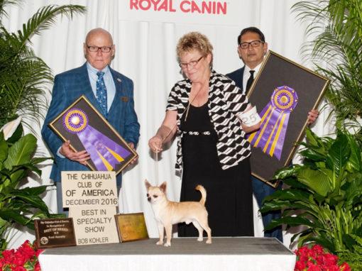 2016 CCA Regional – Royal Canin